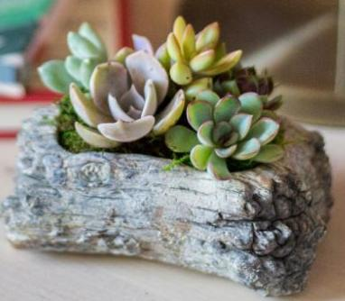 "5"" Adorable Succulent Mini Garden in Concrete Log"