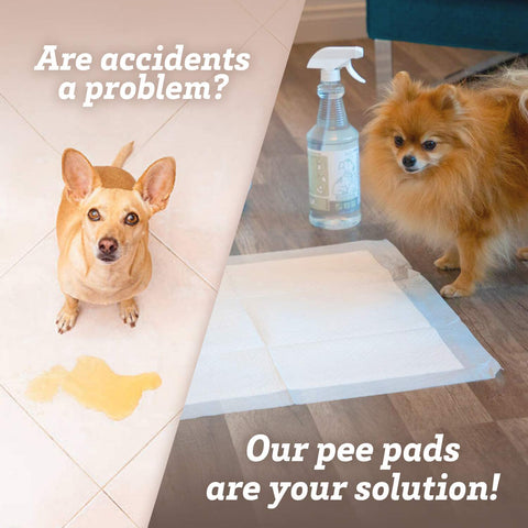 fast absorbing pee pads for training and housebreaking