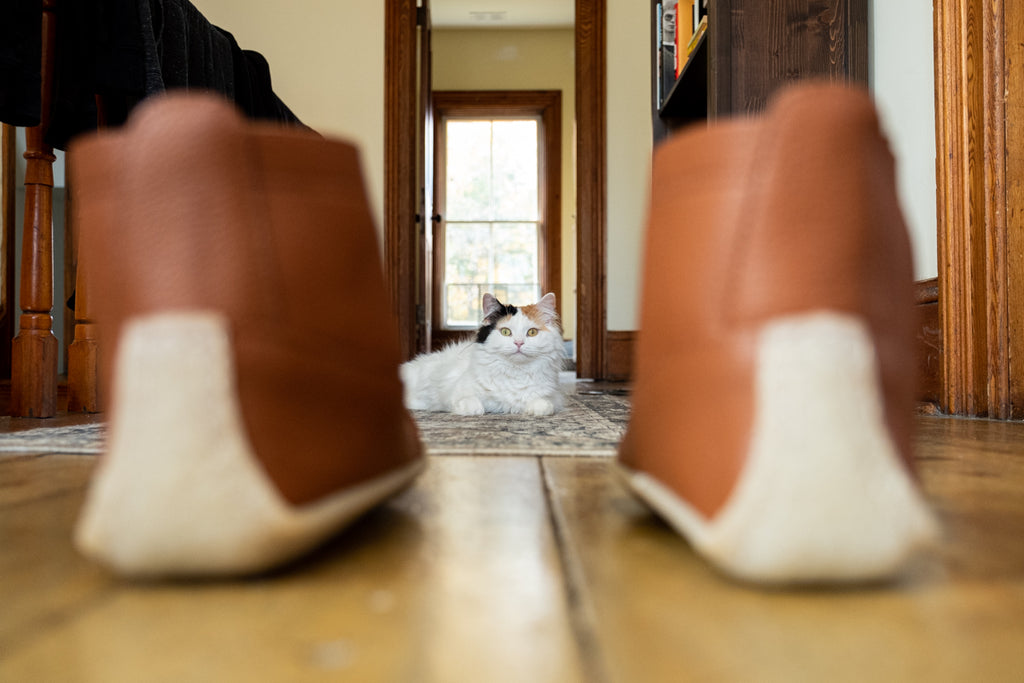 moccasin boots with cat in the background