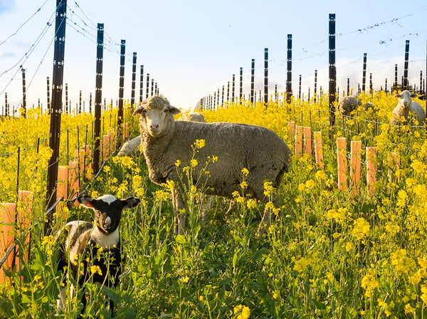 The Adorable Heros of California Wine