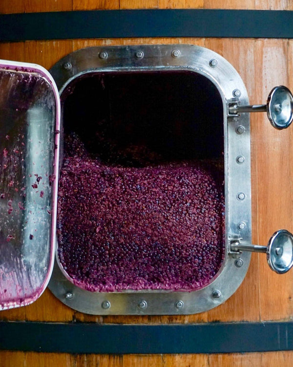 Barrel of Pinot Noir Grapes