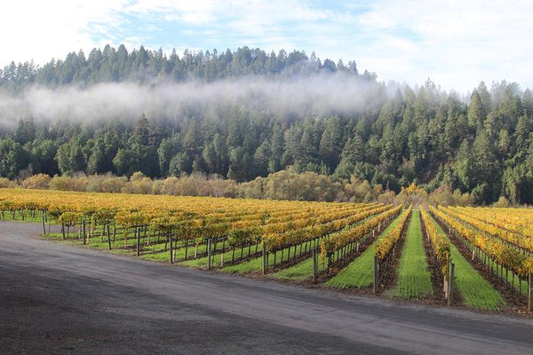 Cool morning view over Ram's Gate Winery California vineyard