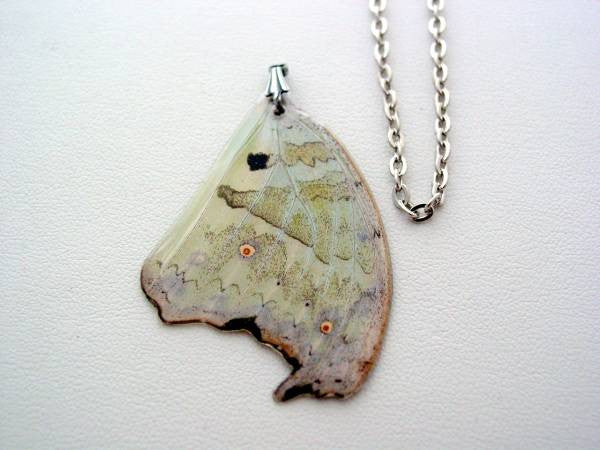 Butterfly Wing Necklace Mother of Pearl Real Butterfly Wing Necklace #4