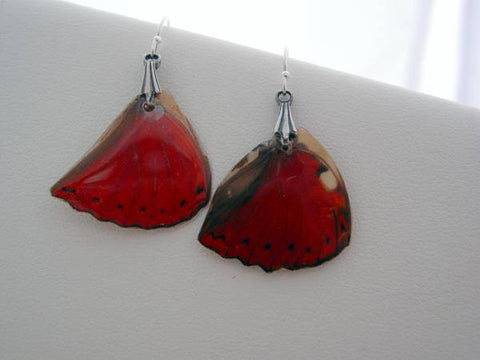Butterfly Earrings Red African Cymothoe Sangaris Real Butterfly Sterling Silver Earrings