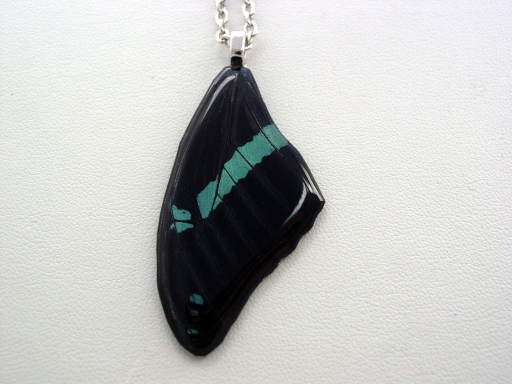 Butterfly Wing Necklace Papilio Nireus Teal Black Forewing Real Butterfly Wing Nature Jewelry