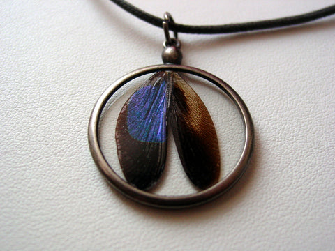 Dragonfly Real Iridescent Blue Dragonfly Wings Necklace Dragonflies Damselfly Real Specimen Resin Wing Jewelry (D6)