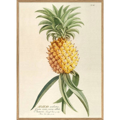 Affiche ananas - The Dybdahl Co