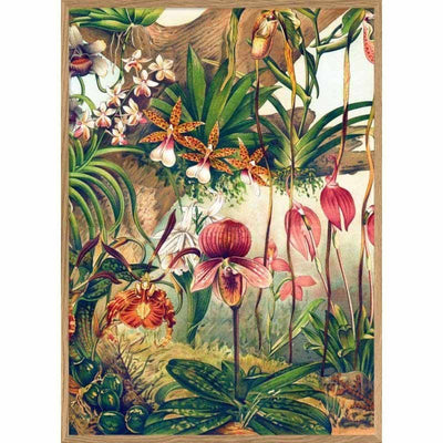 Affiche Orchids - French Blossom