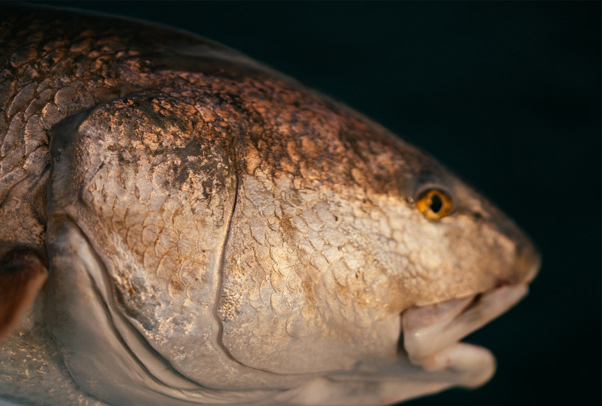 Close-up of fish