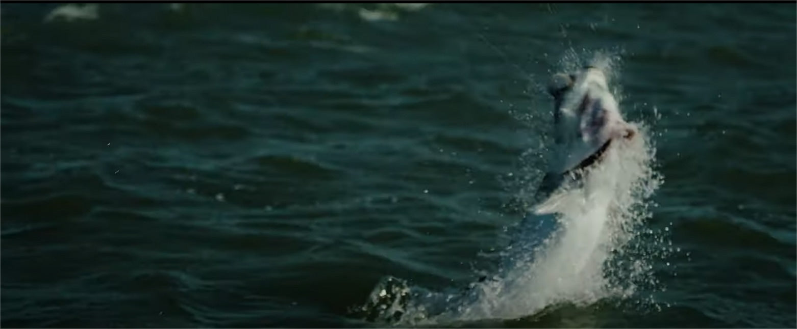 Tarpon Video Placeholder Image