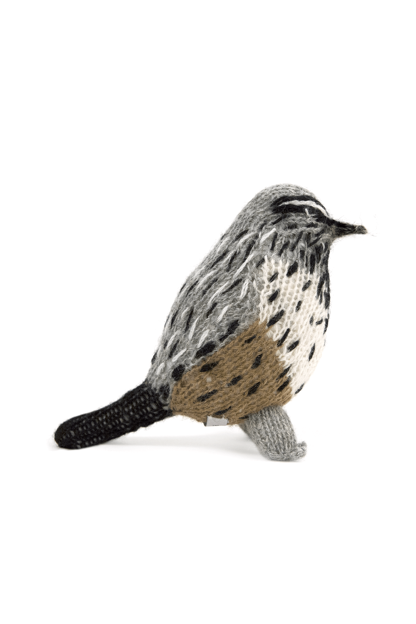 Various Projects Cactus Wren