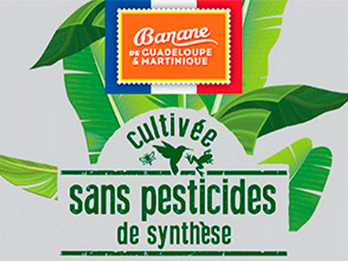 Bananas from Guadeloupe & Martinique without pesticides