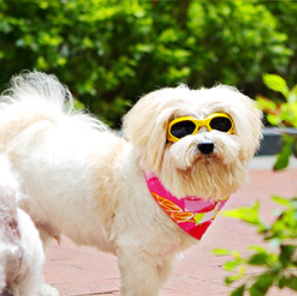 Pet Dogs UV Sun Glasses Eye Wear Protection Sunglasses - Yellow