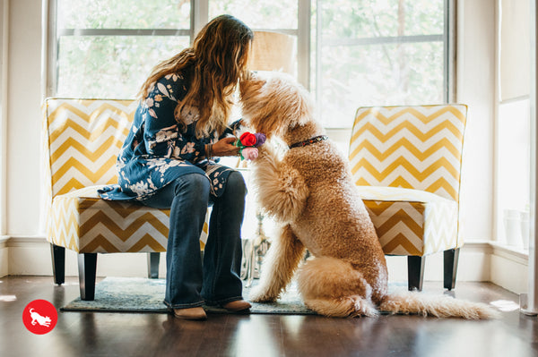 Ginger and Bear Dog-Mother's Day Gift Guide