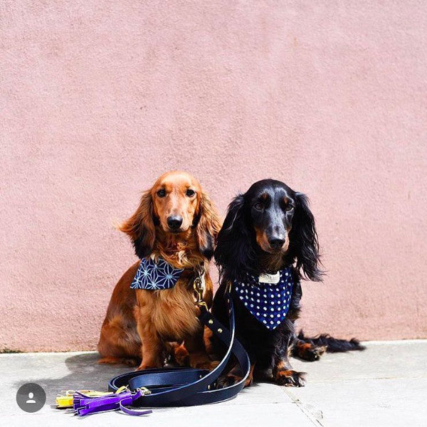 Find Fetch and Follow at Ginger and Bear