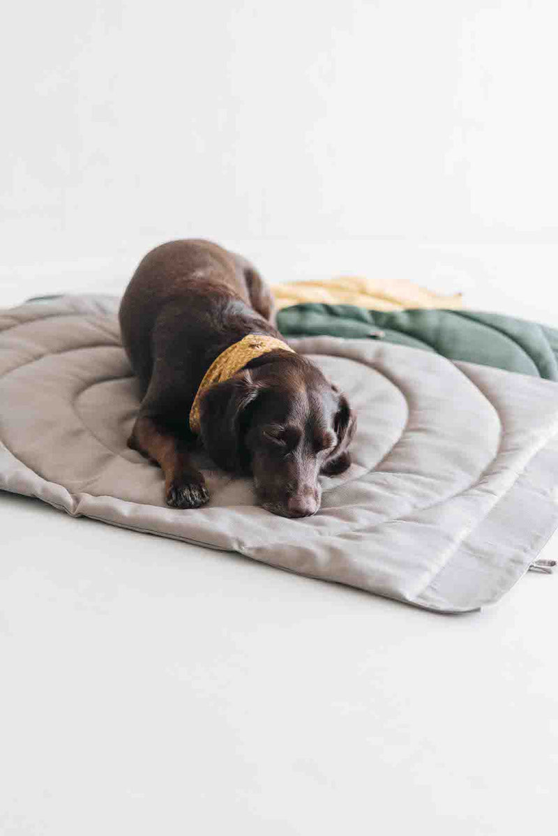 Compass Travel Blanket for Dogs