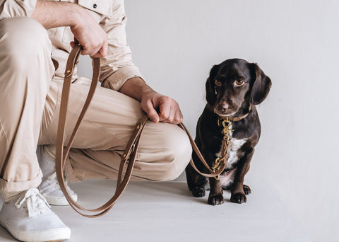 Lasso Leather Leash for Dogs