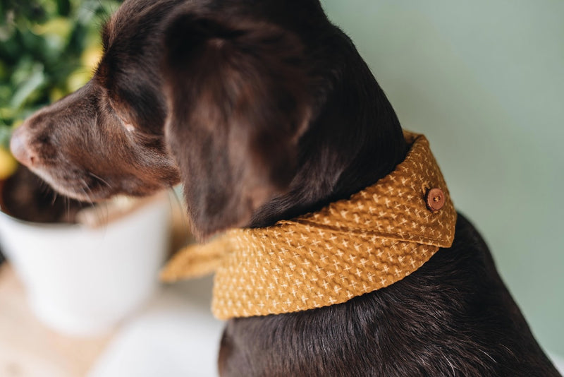 Tori Bandana for Dogs and Cats