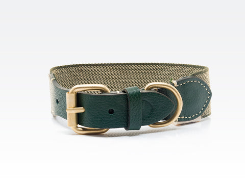 Dog Collar: James Green