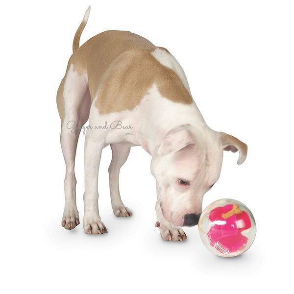 Dog Toy: Interactive Mazee