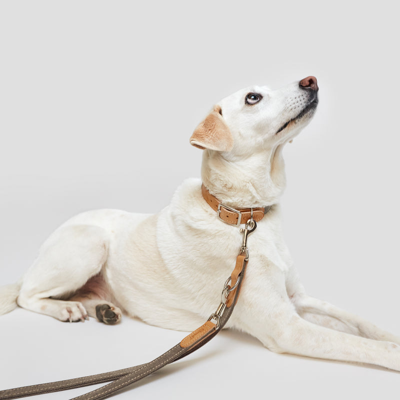 Cloud7: Tivoli Dog Leash in Canvas Leather, Greige