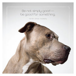 Famous Barks: Pitbull Be Good For Something