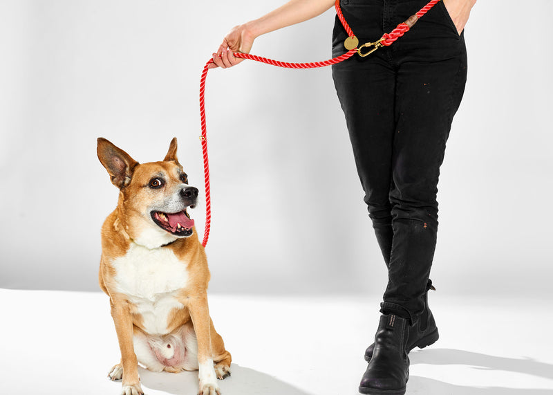Found My Animal Nylon Adjustable Rope leash Red for Dogs