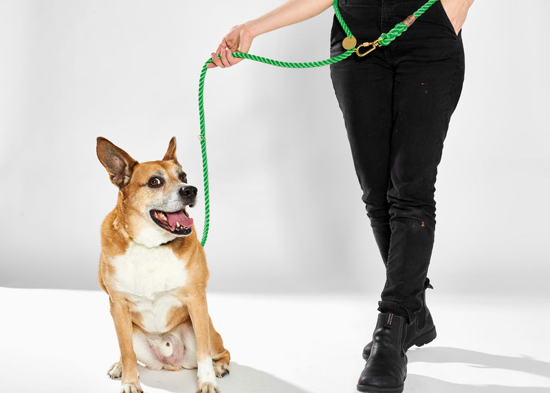 Found My Animal Nylon Rope leash Miami Green for Dogs