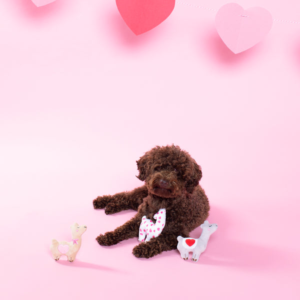 Mini Valentine Llamas, Dog Squeaky Plush toy