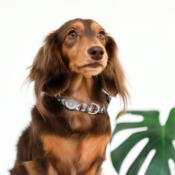 Gentle Pup Dashing Diamond Dog Collar