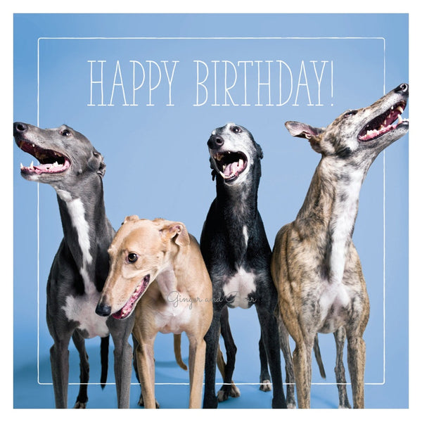 Happy Birthday: Greyhound Gang Happy Birthday