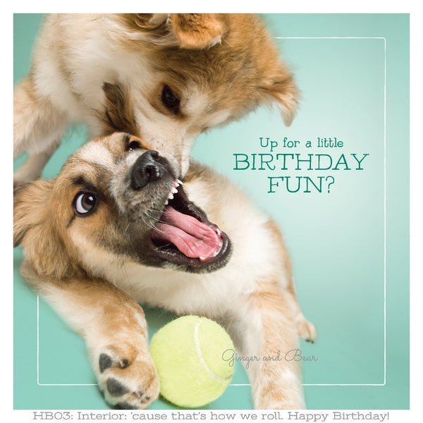 Happy Birthday: Bandit & Zorro's Birthday Fun