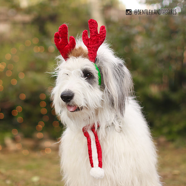 Holiday Antlers for Dogs and Cats