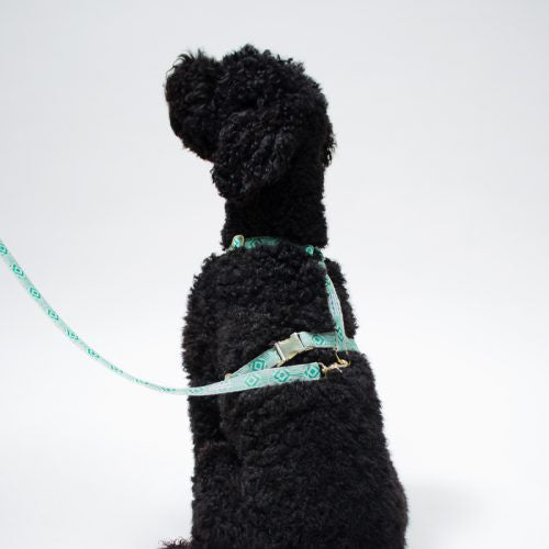 Out of My Box Harness: Teal and Cream