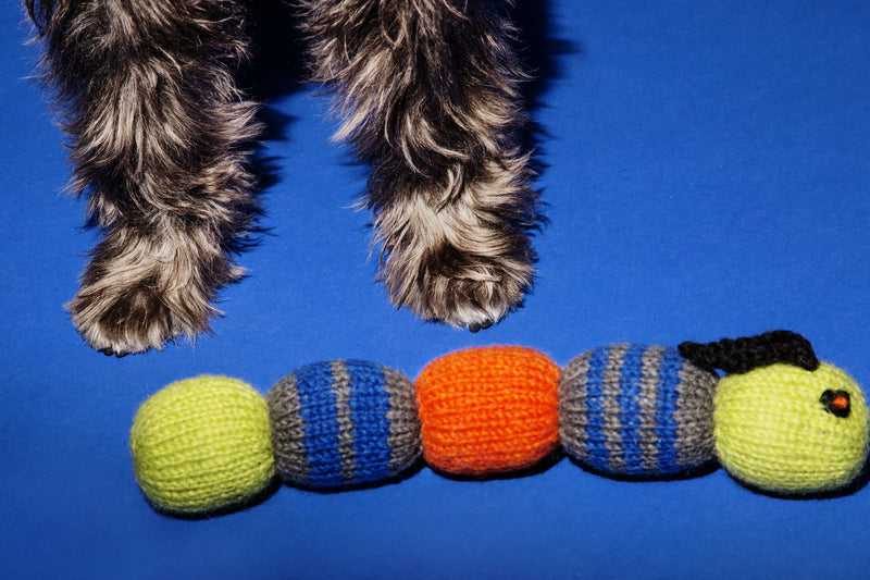 Dog Toy: Hand Knitted Caterpillar