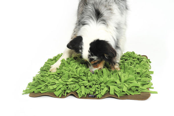 Knauders Best Schnuffelrasen Sniff Lawn for Dogs