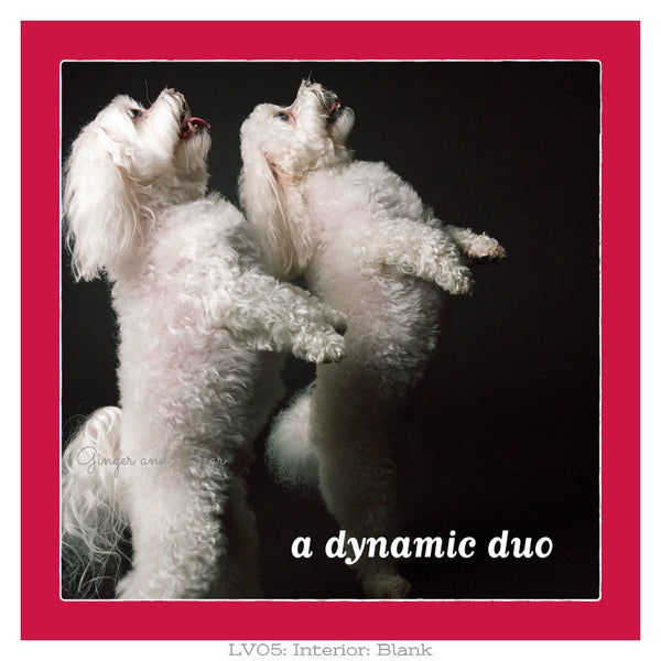Love: Dynamic Duo Maltese Love