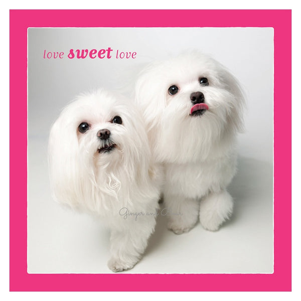 Love: Maltese Love Sweet