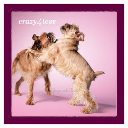Love: Brussels Griffon