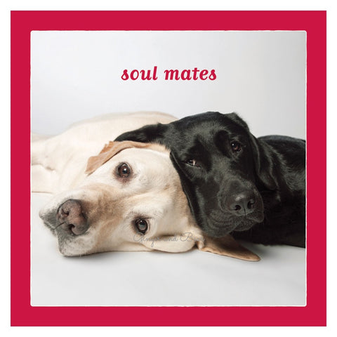 Love: Labrador Retriever Soul Mates