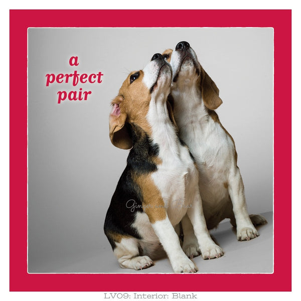 Love: A Perfect Pair Beagle Love