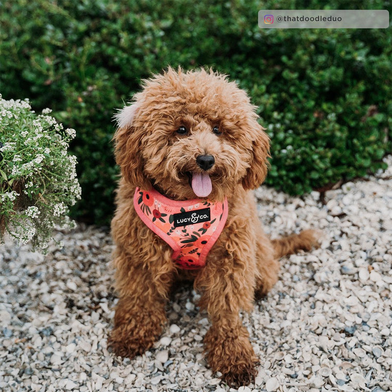 Lucy&Co Reversible Dog Harness: Posy Pink