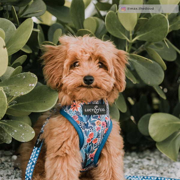 Lucy&Co Reversible Dog Harness: The Royal Garden