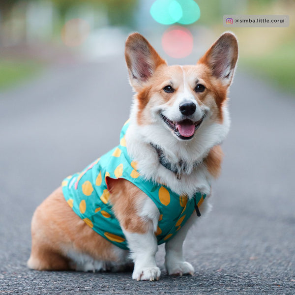 Lucy&Co Reversible Raincoat for Dogs, The Lemon Drop