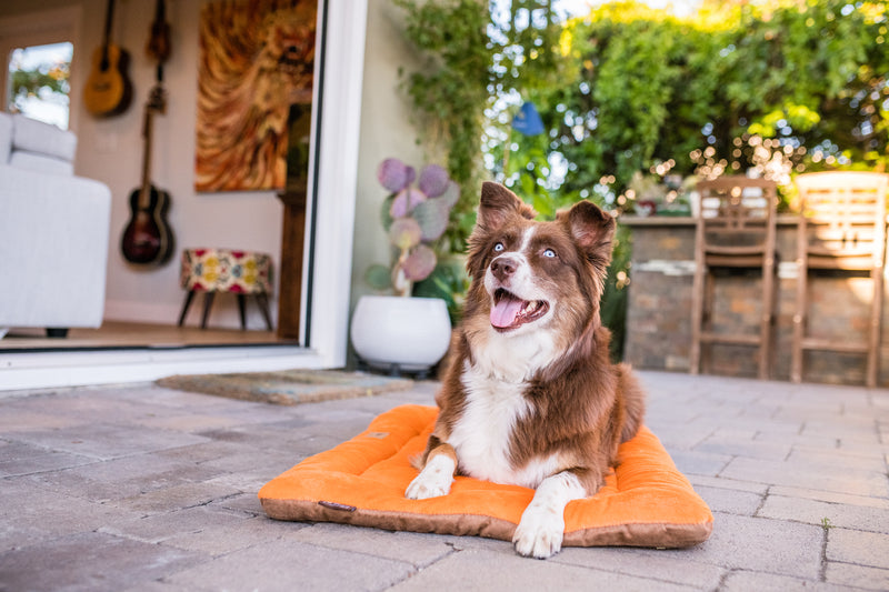 Chill Pad for Dogs and Cats: Pumpkin