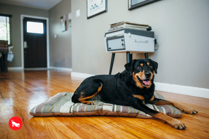 P.L.A.Y. Chill Pad for Dogs and Cats Horizon Seacoast