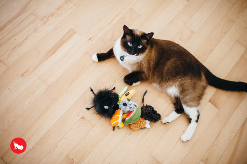 PLAY Feline Frenzy Catnip Toy Cats