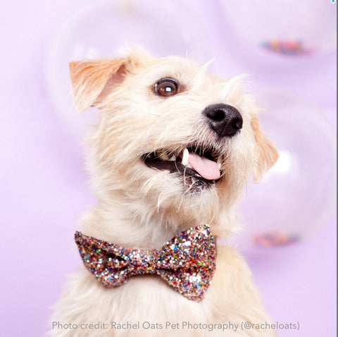 Bow tie: Glitter Multi-colour