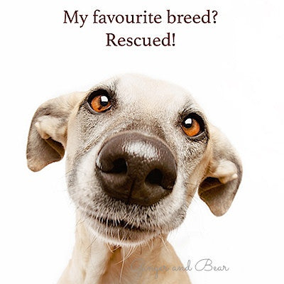 Postcard: My favourite breed? Rescued!