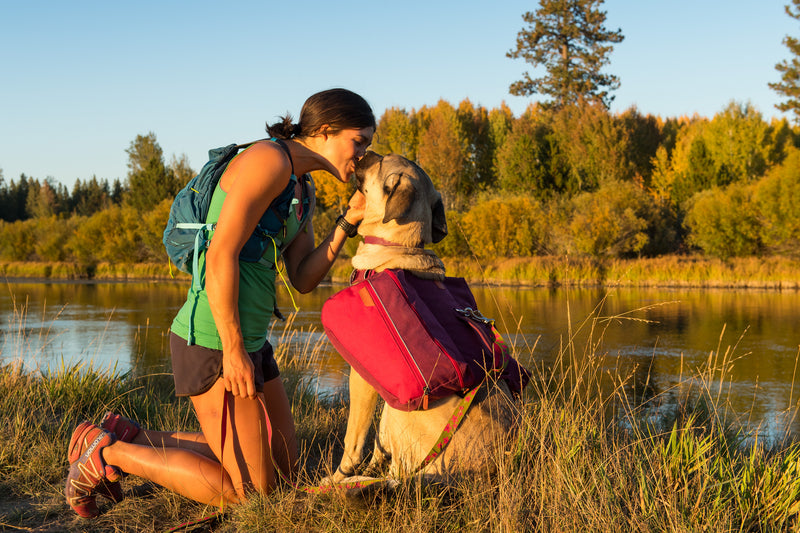 Ruffwear Dog Pack: Commuter Pack in Lackspur Purple